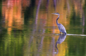 Photo by Jeff Bucklew. 2012 Photo Contest