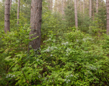 ground-cover-greenery