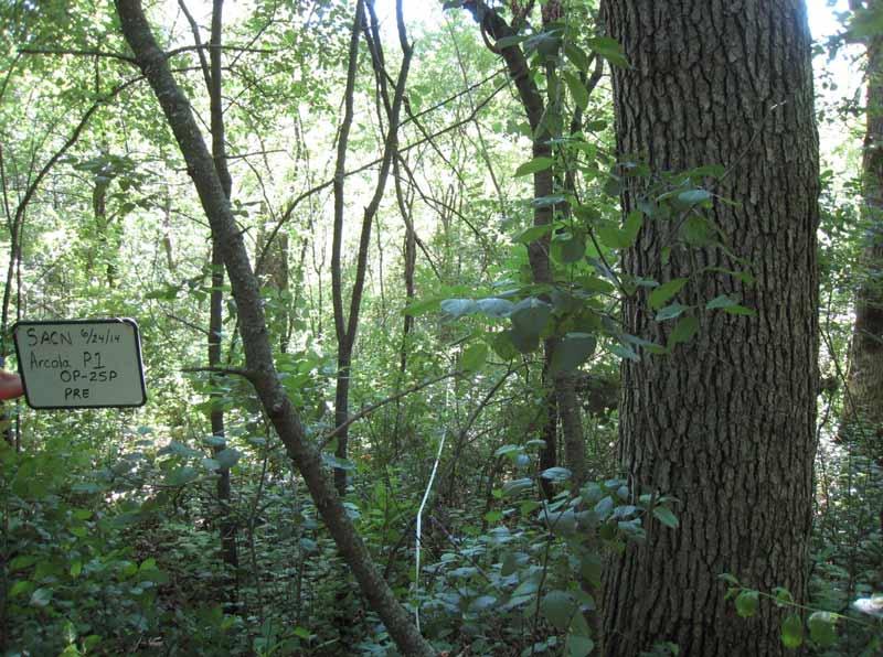 habitat-restoration-pre-treatment
