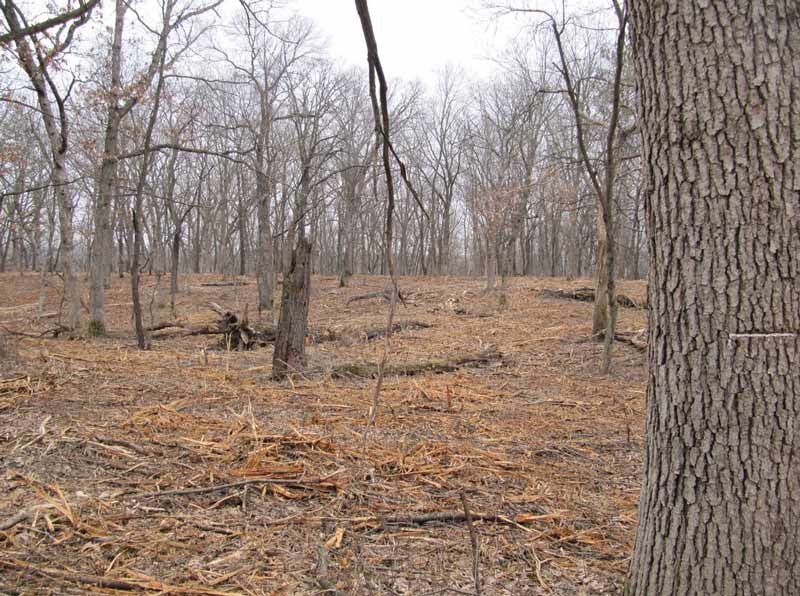 habitat-restoration-year-one