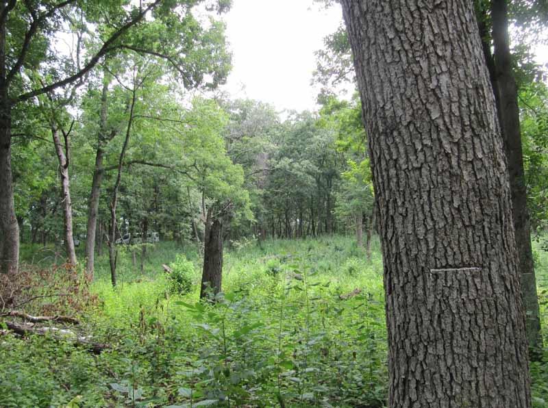habitat-restoration-year-two