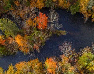 hero-trees-river-arial-view
