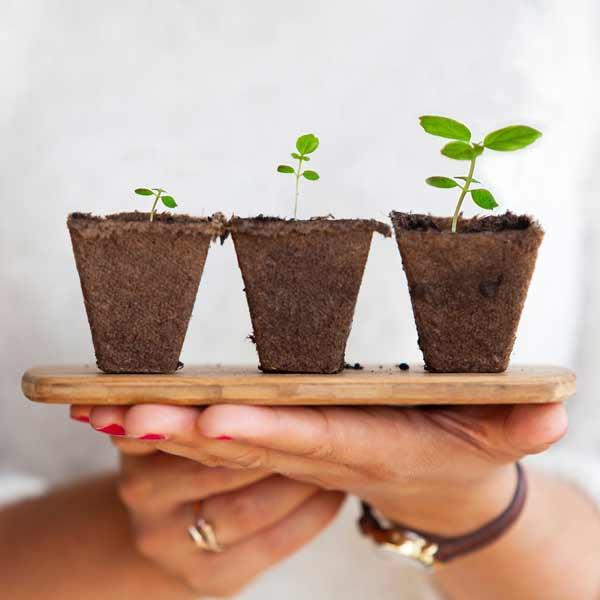 holding-plants-gift-stock