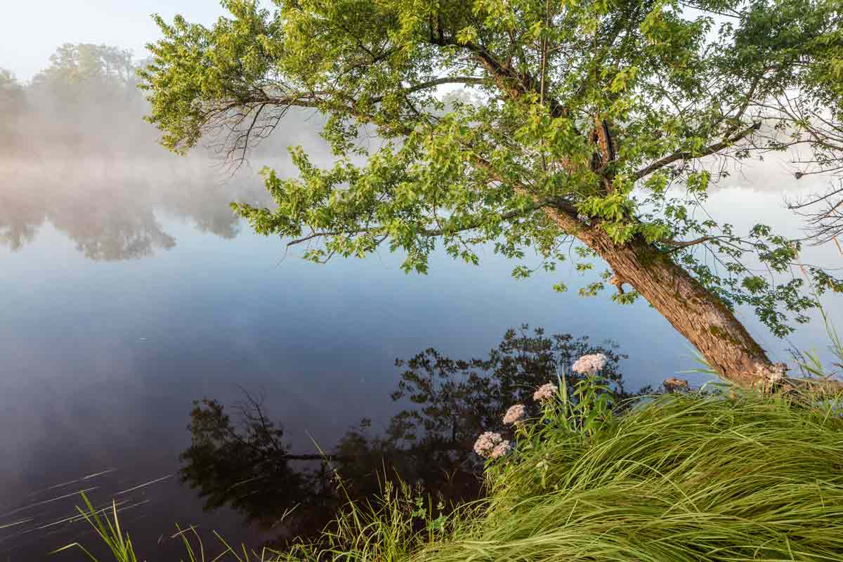 leaning-tree-on-river-bank