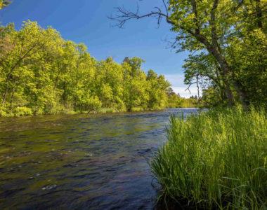 water-edge-weeds-lower-riverway