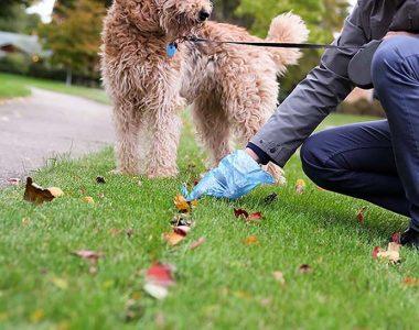 You-Should-Always-Pick-Up-Your-Dog's-Poop