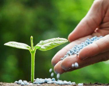 global-fertilizer-market