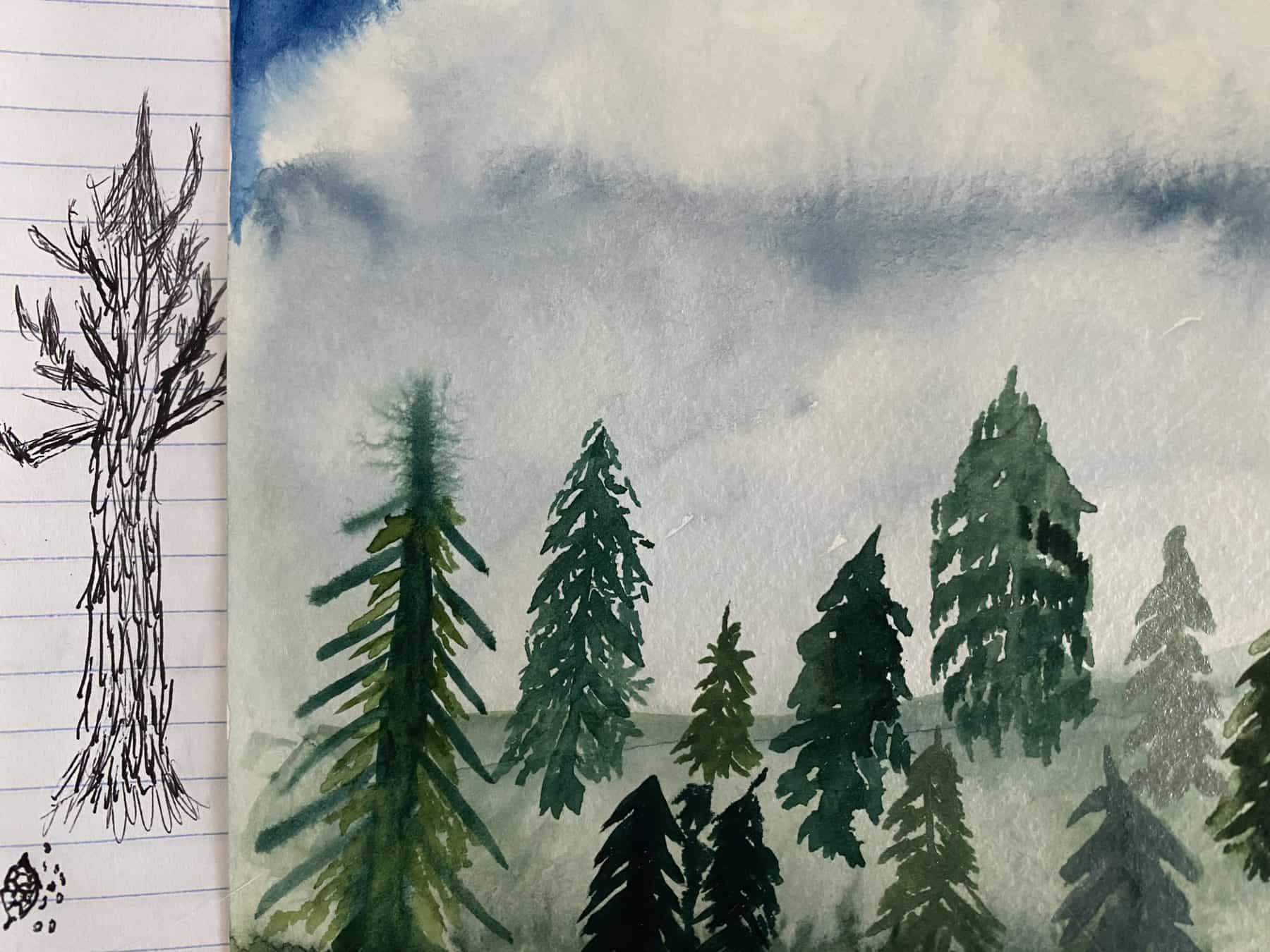 A sequoia sketch with ballpoint pen, and a forest of practice evergreens in watercolor. (Photo Credit: Sophia Patane, SCRA)