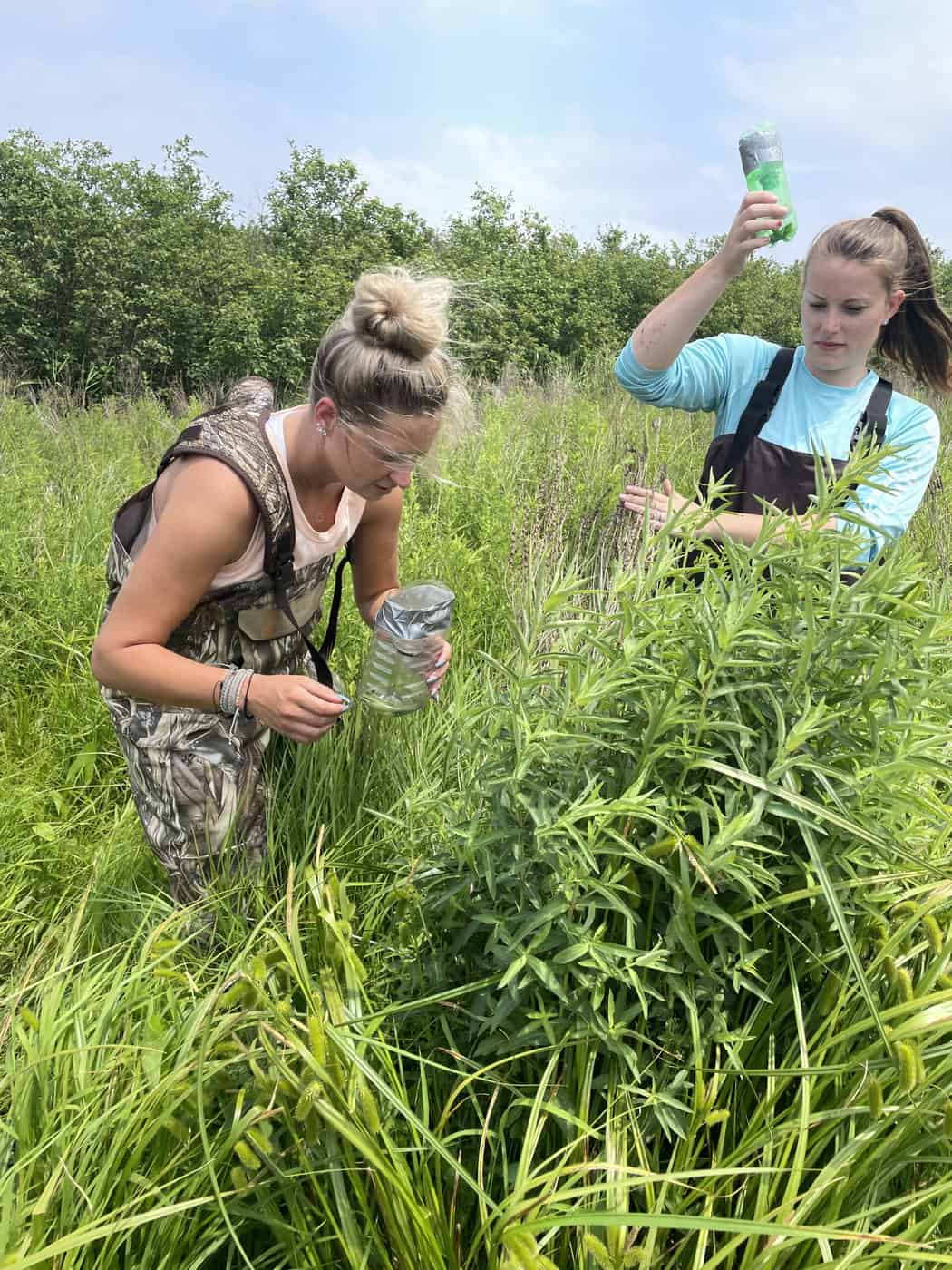 Two young woman stand behind a plant and gather beetles. Photo by Katie Sickmann
